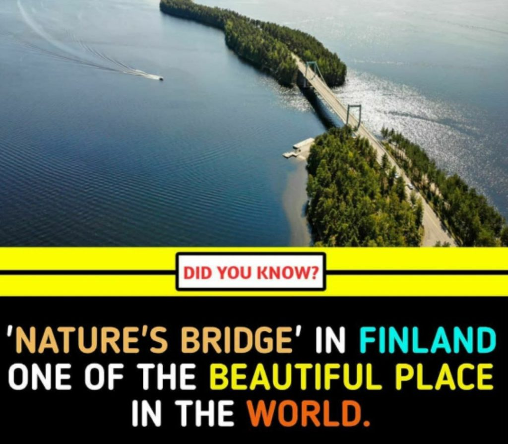 Nature'e Bridge  in Finland one of the Beautiful Place in the world